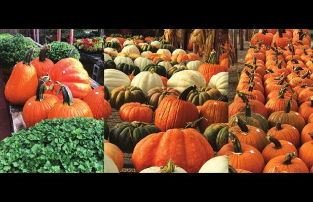 'Days decrease, ... autumn grows …'